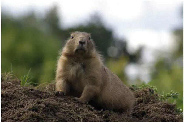 'Groundhog Day' deleted scene – Phil the Pool Hustler